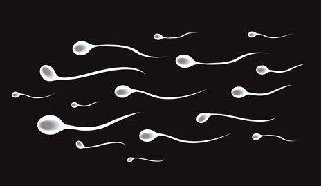 illustration of sperm cells