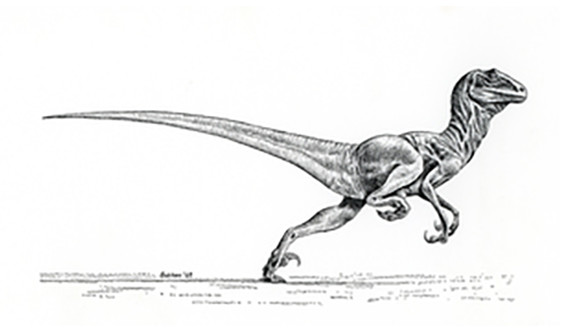 A drawing of Deinonychus by Robert Bakker '67, which appeared in Ostram's original paper describing the dinosaur.