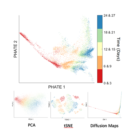 PHATE visualizations compared to those created by PCA, tSNE, and Diffusion Mapping