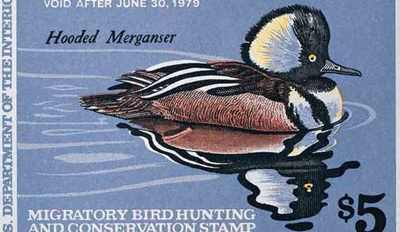A postal stamp featuring a watercolor painting of a Hooded Mergancer.