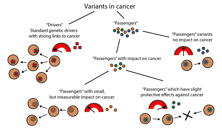 Chart shows the variants in cancer drivers and passengers.