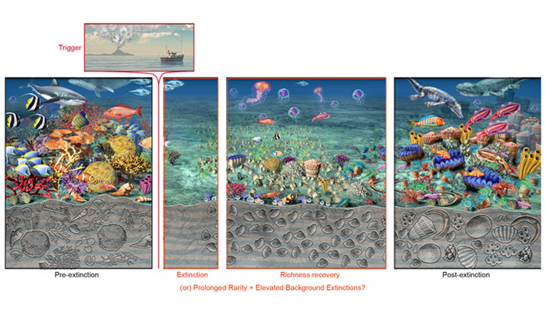A marine extinction cycle illustrated with a series of images, from pre-extinction to extinction and recovery.