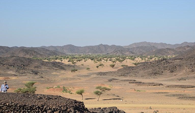Trees in the Sudanese desert.