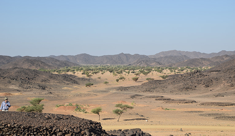 Trees in the Sudanese desert.