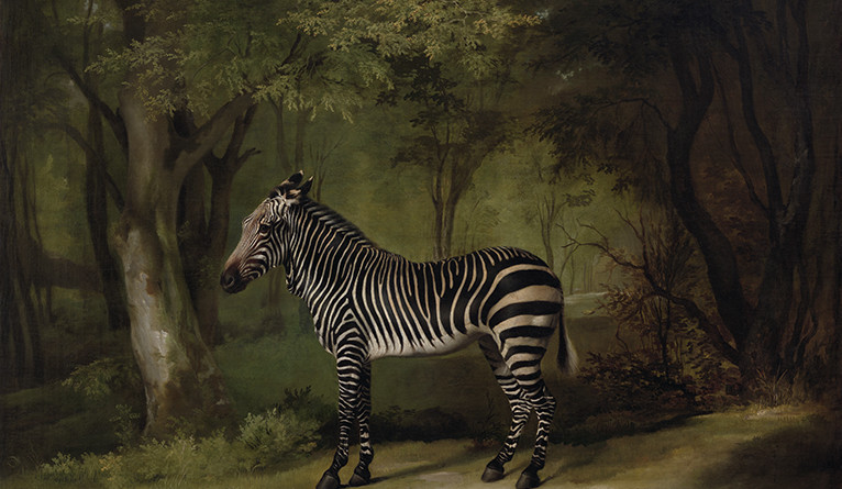 George Stubbs, Zebra, 1763, oil on canvas, Yale Center for British Art, Paul Mellon Collection