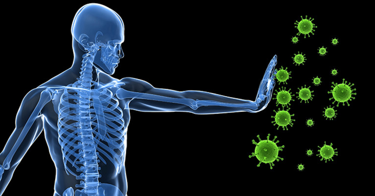 Combination therapy boosts antiviral response to chronic infection |  YaleNews