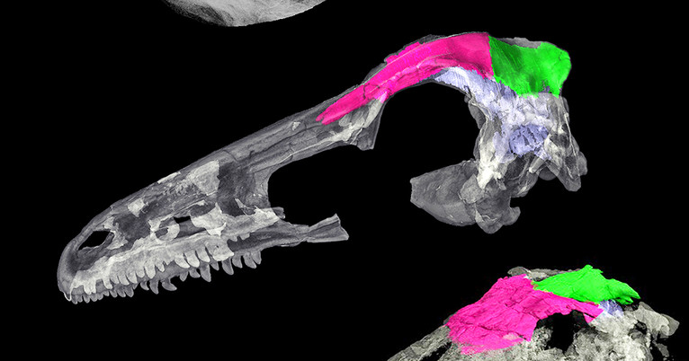 Scientists Track The Brain Skull Transition From Dinosaurs To Birds
