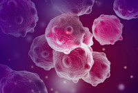 cancer cells in the body