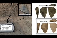 A large sharp-edged  artifact found in situ at the Bokol Dora site