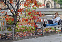 A Berkeley College student looks at her laptop on an outdoor bench.
