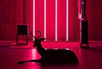 A painting depicting a deer sitting on a floor inside a room suffused with red light.