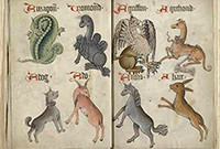 Drawings of mythical creaturies, including a phoenix and a unicorn.