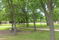 Trees in a New Haven park.