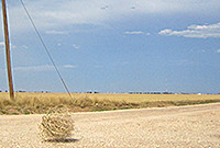 A photo of a tumbleweed on a deserted.