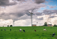 Wind turbines and cows in a field in Scotland.