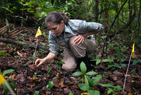 Scientist kneeling on a forest floor near a flag-marked area.