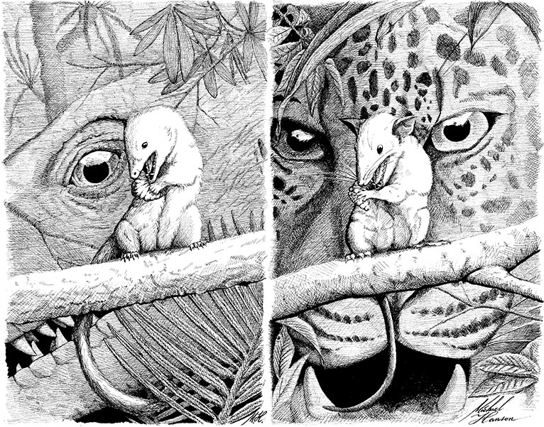A lizard and a leopard looking at similar prey — one swallows food whole, the other can chew.